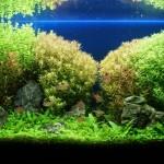 水草のトリミングとメンテナンスの方法を紹介!!